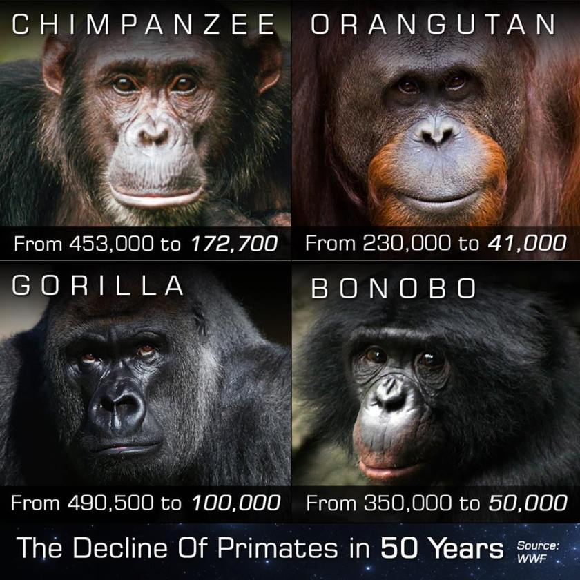 The Decline of Primates in 50 Years