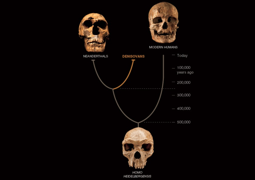 Denisovan Family Tree