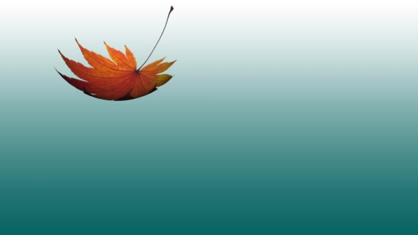 Maple Leaf Falling